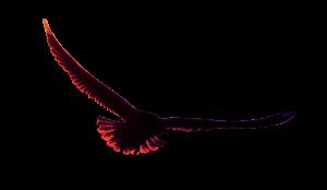 adelaar-300x174
